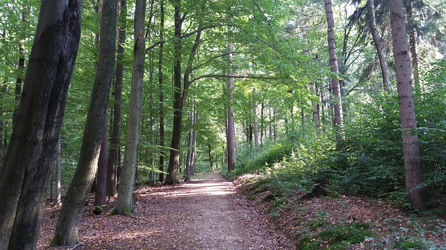 forest-975920_640